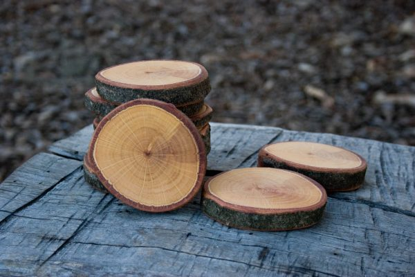 wooden log disc